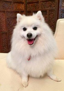Fiona s dog