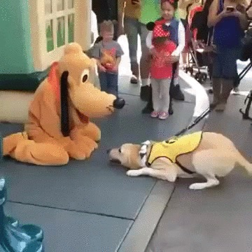 Pluto meets dog